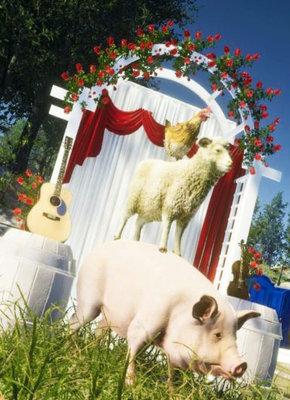 Wedding Designer pelna wersja